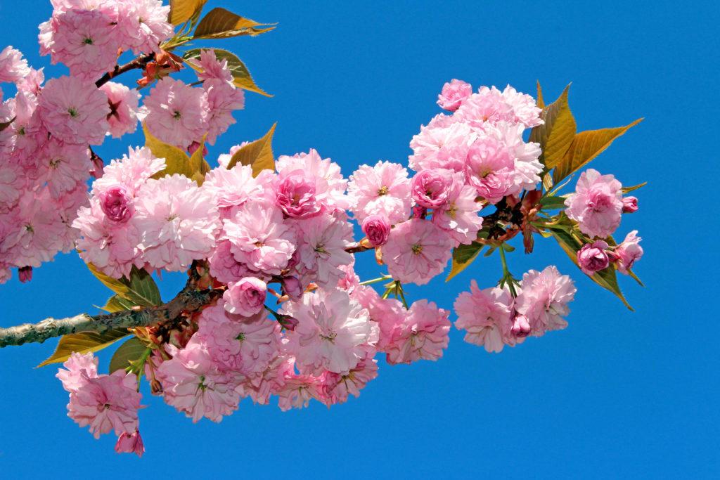 Blütenpracht von Detlef Schwarz, Foto aus Friesack