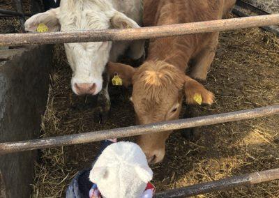 Erster Kontakt zu Kühen von Christina Gerhardi, Foto aus Friesack