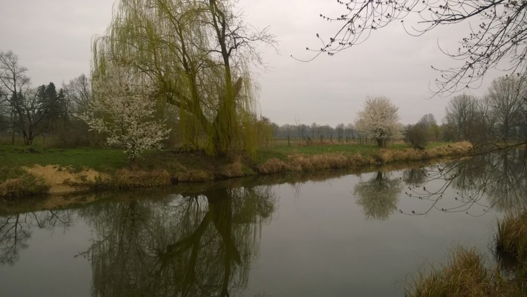 Frühling am Rhinkanal in Damm von Dagmar Möller, Foto aus Friesack