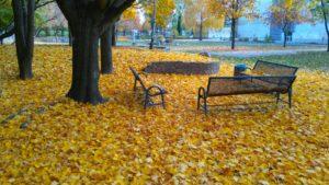 Herbstgeflüster von Jennifer Fischer, Foto aus Friesack