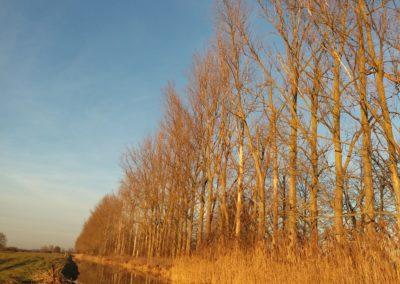 Herbstgold von Katrin Gerhardi, Foto aus Friesack