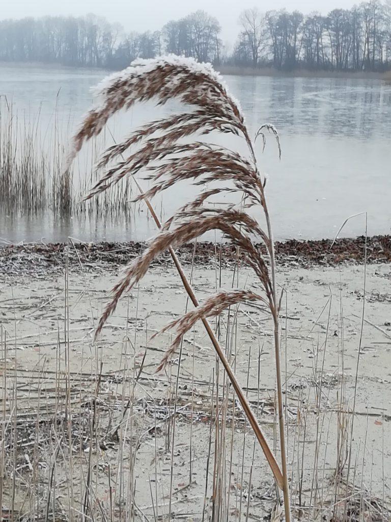 Klessener See, Schönheit des Unscheinbaren von Dr. Marion Ziesmer, Foto aus Friesack