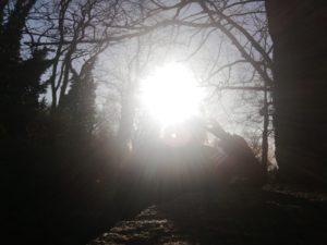 Natur, Sonne, Friesack von Lena Wollenberg, Foto aus Friesack