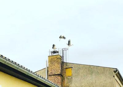 Fliederfest Storchenparty auf dem ehemaligen Kulturhaus in Damm von Camilla Pinder, Foto aus Friesack