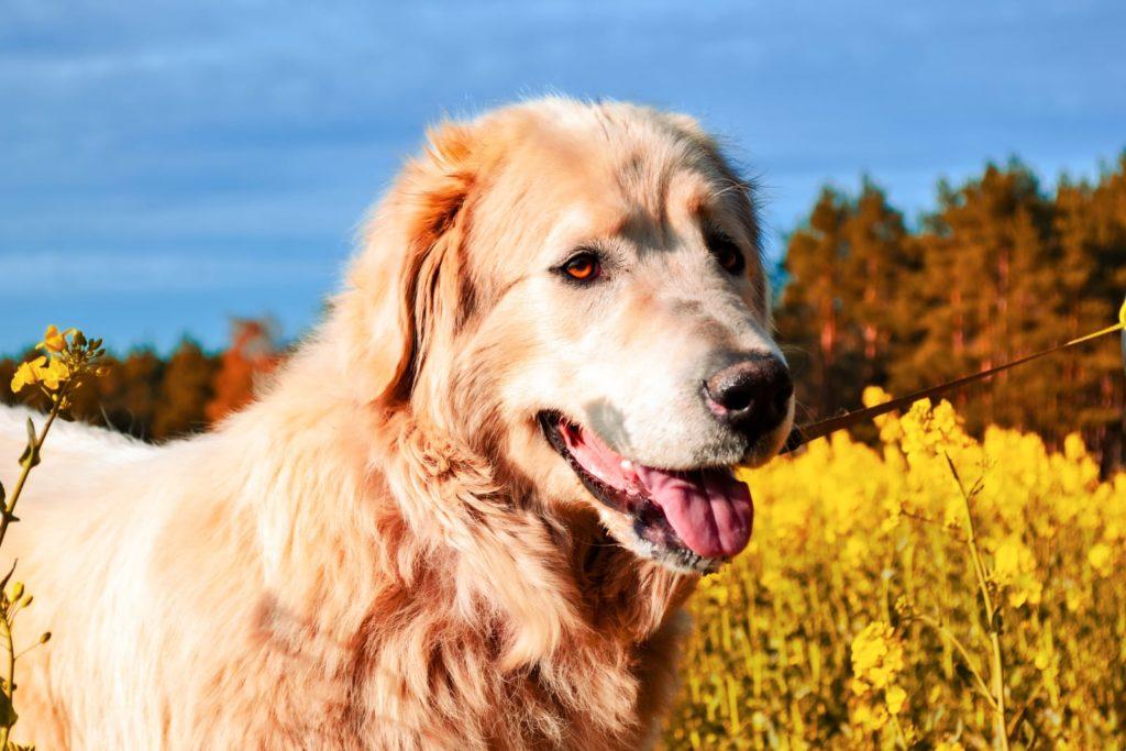 Fliederfest Die wahre Schönheit eines Hundes liegt in den Augen von Charly, Foto aus Friesack