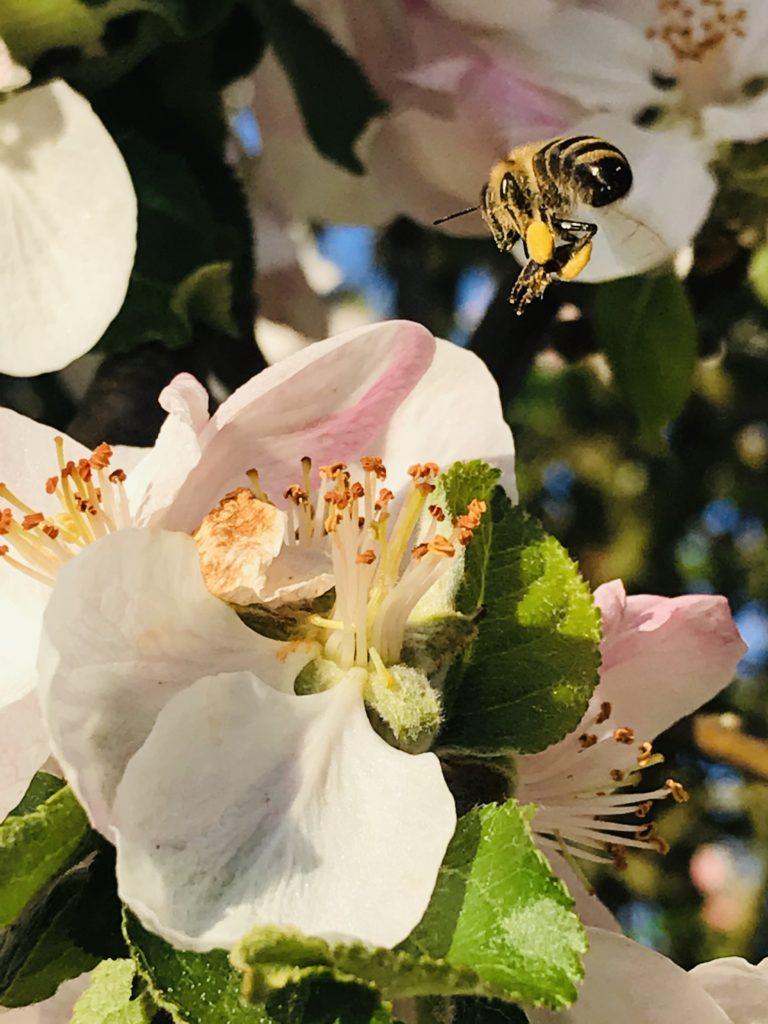 Fliederfest Die Honigmacher von Christoph Bajohr, Foto aus Friesack