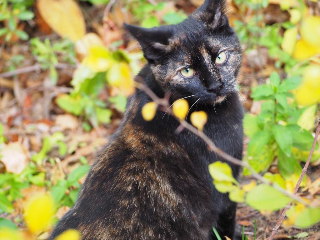 Fliederfest Katzentraum Natur von Daniela B., Foto aus Friesack