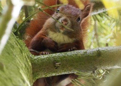Fliederfest Wilde Tierwelt in Friesack von Daniela B., Foto aus Friesack
