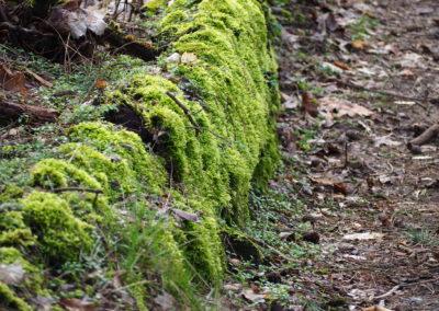 Fliederfest Waldspaziergang von Daniela B., Foto aus Friesack