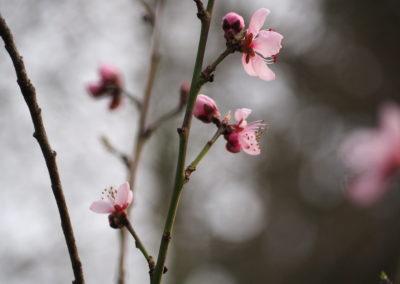 Fliederfest Frühjahr in Friesack von Daniela B., Foto aus Friesack