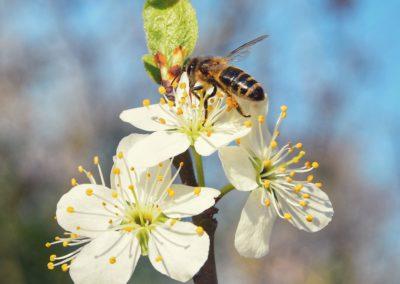 Fliederfest Frühlingserwachen von Franziska Heinrich, Foto aus Friesack