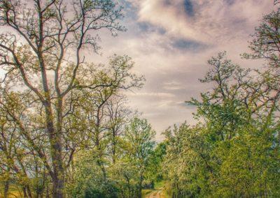 Fliederfest Dieser Weg... von Franziska Heinrich, Foto aus Friesack