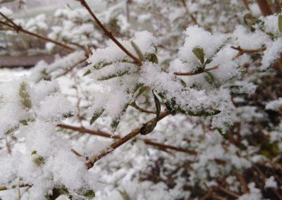 Fliederfest Erster Schnee in Friesack von Ida, Foto aus Friesack
