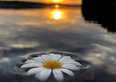 Fliederfest Sonnenuntergang von Ida Stöcker, Foto aus Friesack