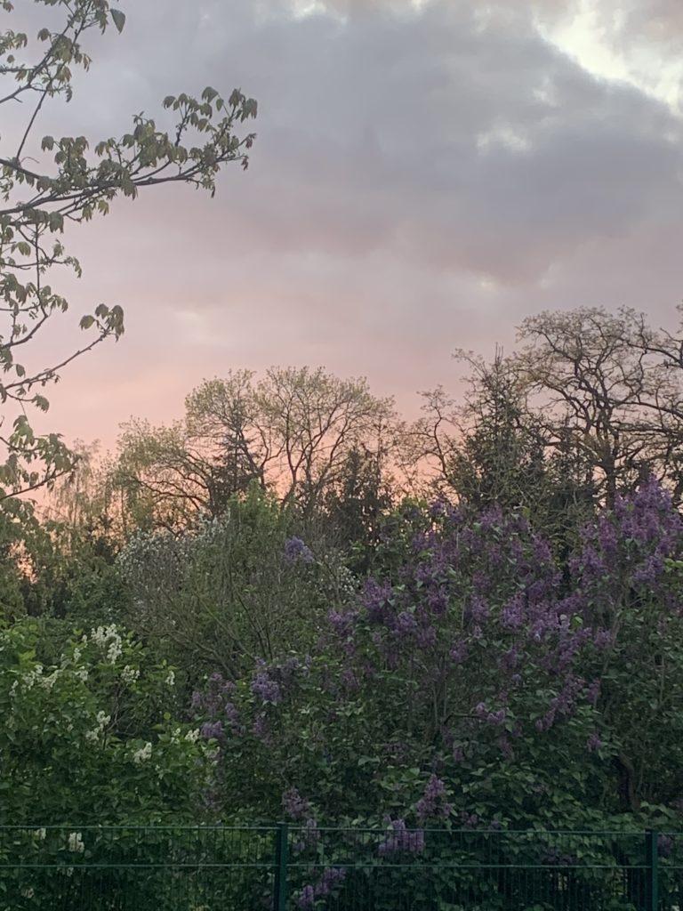 Fliederfest Fliederblüte im Abendlicht von Nancy Möller, Foto aus Friesack