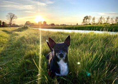 Fliederfest Sonnenuntergang am Rhin von Sophie, Foto aus Friesack